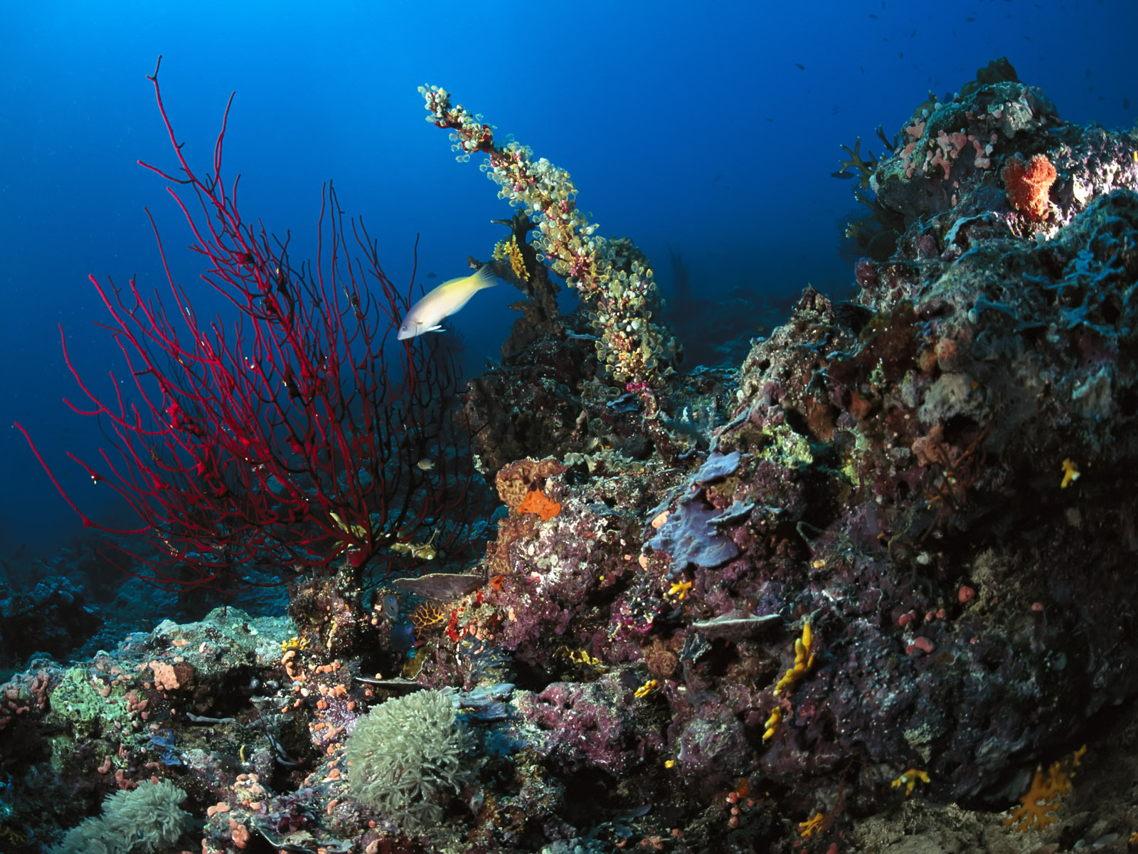http://4.bp.blogspot.com/_sRGU_JXOz6E/TRYOcwEKqKI/AAAAAAAAAes/06k0SfSL4rU/s1600/Underwater%2BLandscapes%2B%2BWallpaper%2B%25252879%252529.jpg