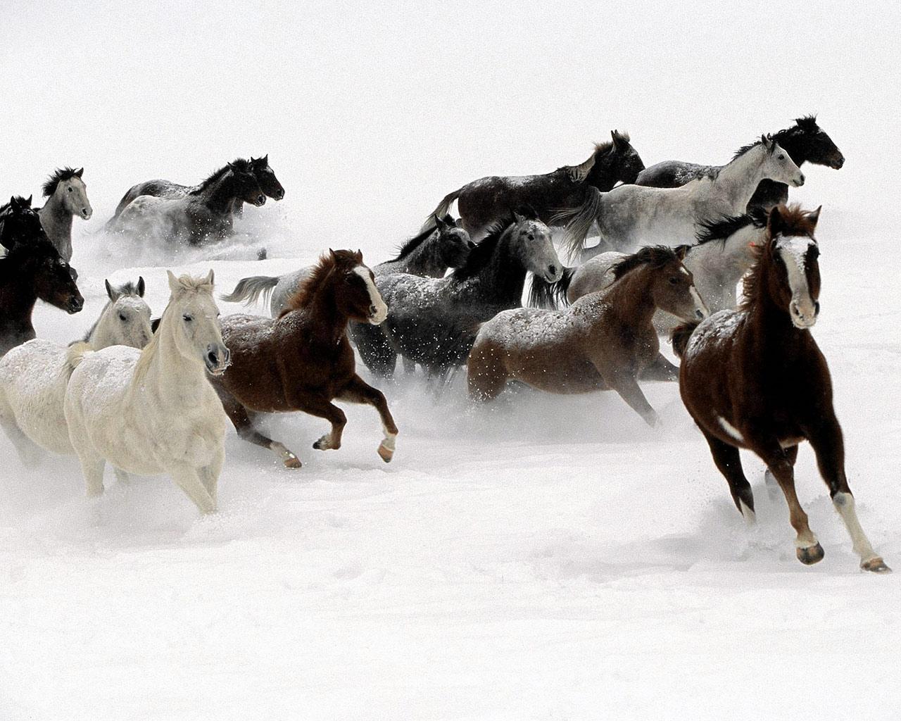 http://4.bp.blogspot.com/_sRGU_JXOz6E/TRfUi50StaI/AAAAAAAAAmQ/qSsbqBKBFeM/s1600/galloping-horse.jpg