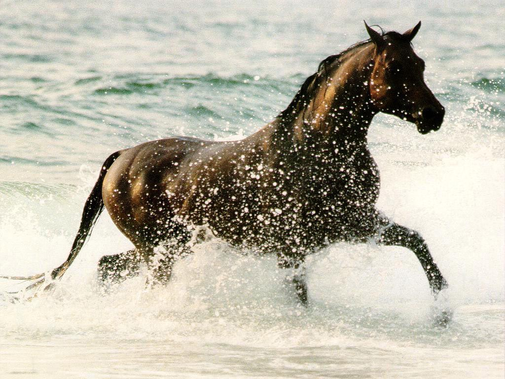 Water horse wallpaper - photo#17