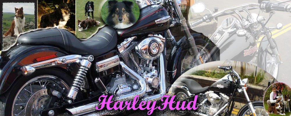 Harley Hud