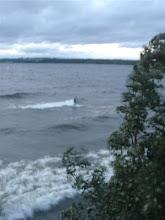 Surf in Storsjön