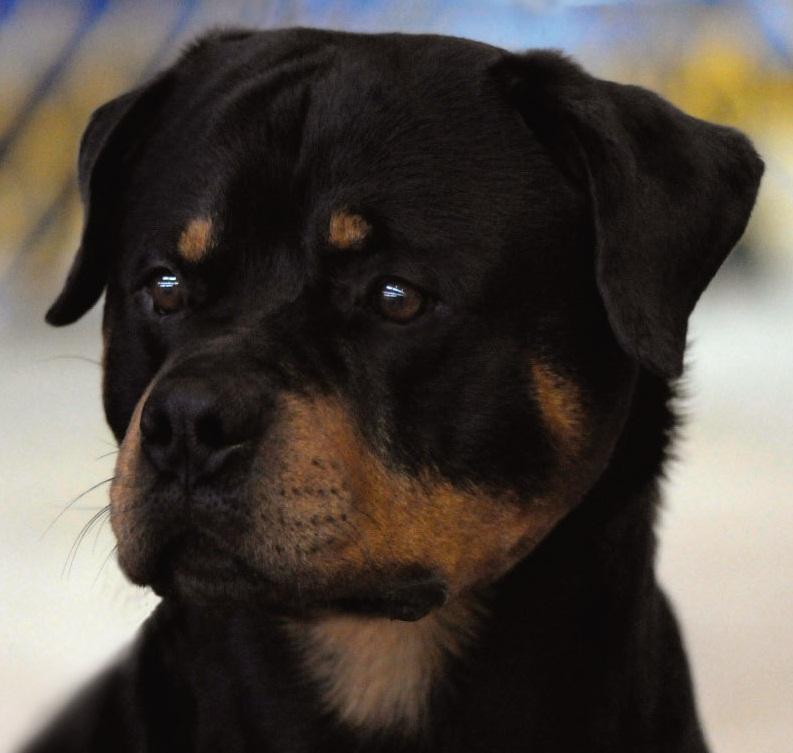 DOG SHOW POOP: GRANITE...