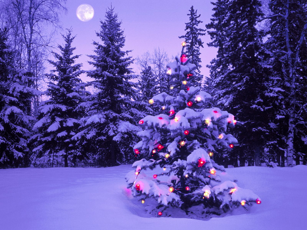 Online free stuffs christmas wallpapers Outdoor christmas tree photos
