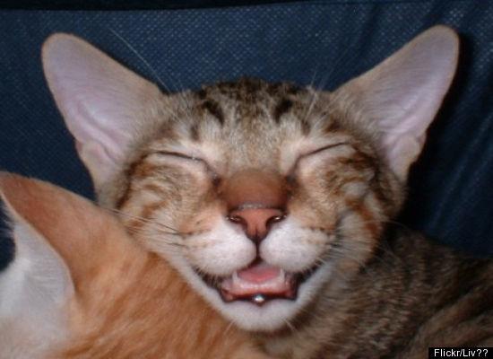 CatBigSmile.jpg