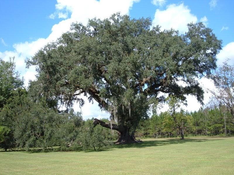 Word Witch: Naga Tree, Part 3