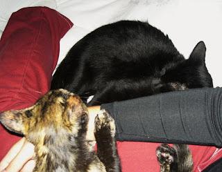 gatos dormindo