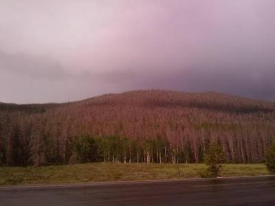 Yellowstone - Matthieu Auzanneau
