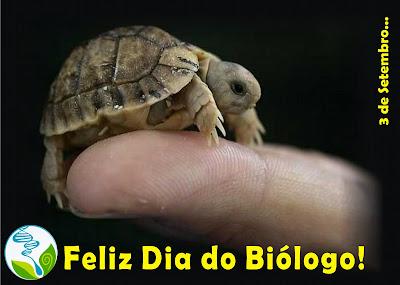 dia do biólogo - tartaruga