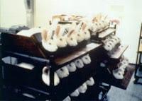 coelhos em laboratório