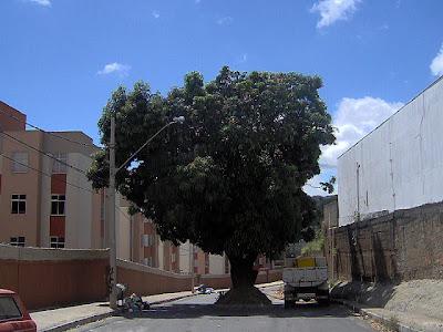 uma única árvore muito verde