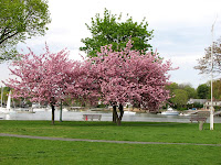 Park with cherry trees