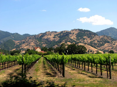 A field of grapevines, Sonoma County, CA