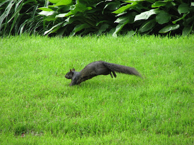 Frolicking squirrel