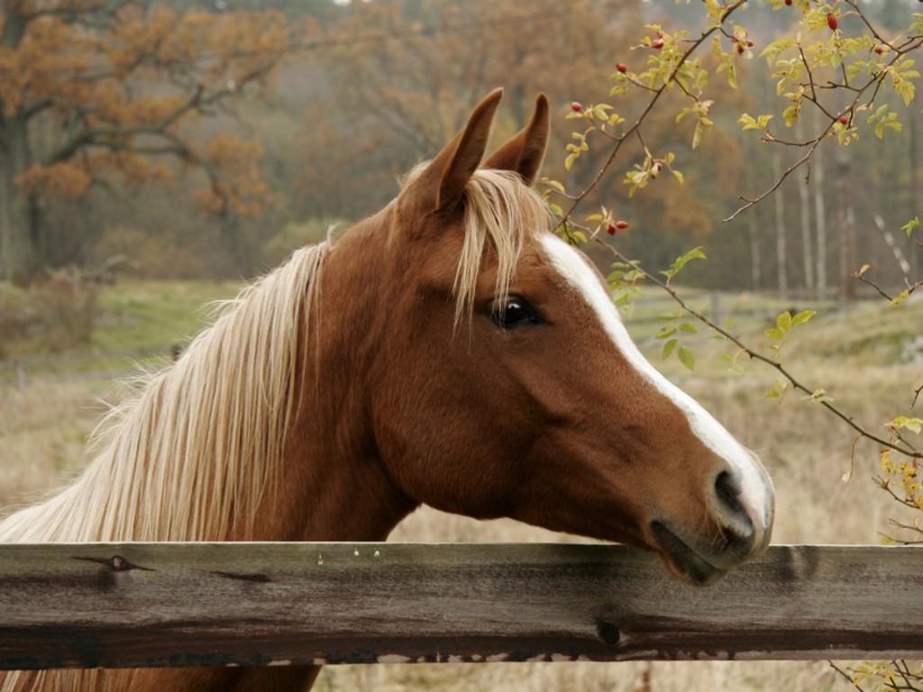 Konji - Page 2 Autumn-horse