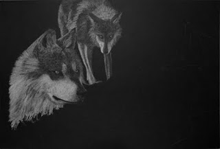 Mexican wolves white charcoal pencil drawing in progress
