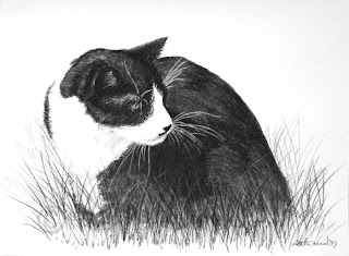 tuxedo cat portrait drawing in charcoal