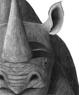 black rhinoceros charcoal drawing