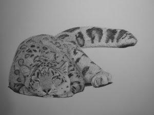 snow leopard drawing in progress
