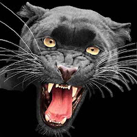 ADAPTATIONS - ALL ABOUT BLACK PANTHERS