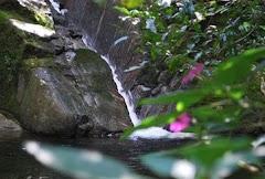 Cachoeiras de Macacu...