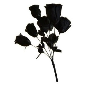 Starz roses colours meanings for Do black roses really exist