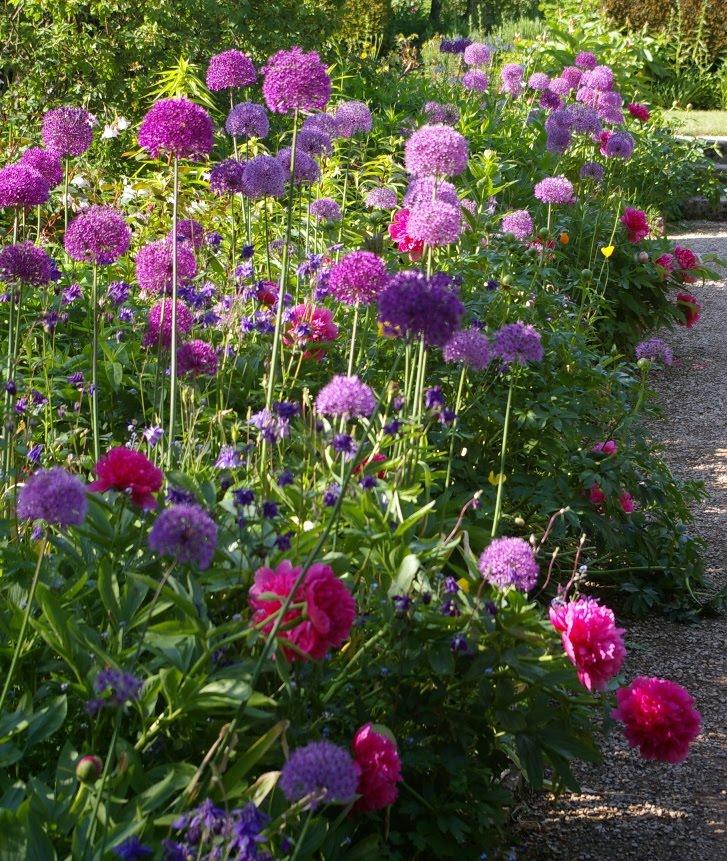 John Grimshaw 39 S Garden Diary Hidcote
