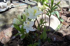 kwiaty dla wszystkich mam