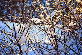 zimowe zmartwieniaKiedy chmurom rozpruły się brzuchy  i dzień cały padało bez przerwy po południu t