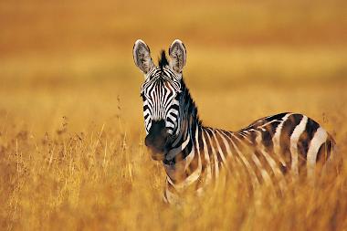 Tecnologia para salvar espécies ameaçadas!
