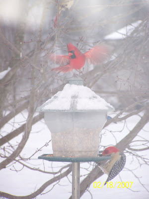 A whimsical WinterTime picture taken at our bird feeder last winter