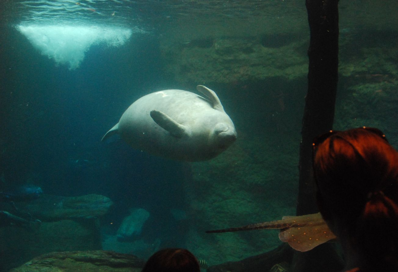 Zoo And Aquarium Design Manatee Mixed Species Exhibit