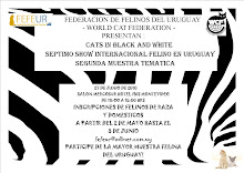 SEPTIMO SHOW INTERNACIONAL FELINO
