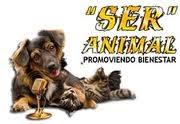 Radio SERANIMAL , el sentir de Ser Animal