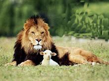 oveja y león