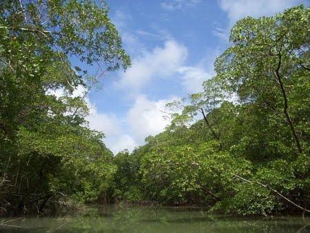 Floresta Estadual do Rio Liberdade