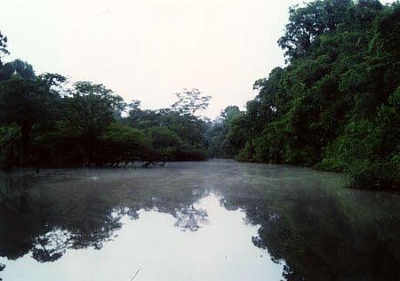Floresta Estadual de Sucunduri