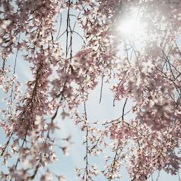 دخل الربيع يضحك