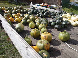 A trailer-load of pumpkins and squash