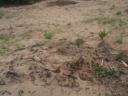 Εγκληματική καταστροφή στη λιμνοθάλασσα Γιάλοβα Μεσσηνίας