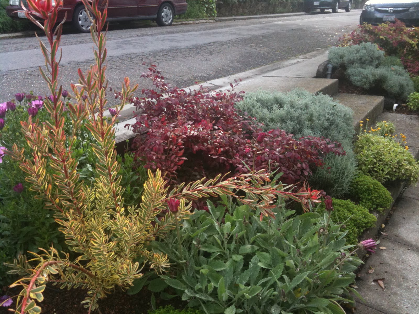 Berkeley Hills Parking Strip Planting