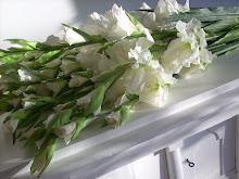 Jag älskar Gladiolus.