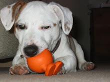 "My dog ""Boris"" and his sqeaker"