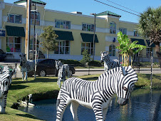 Zebras in Myrtle Beach!