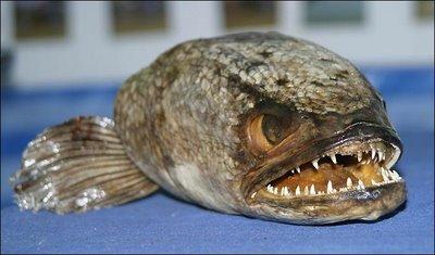 piranxas.jpg