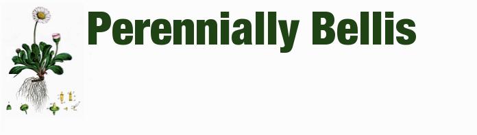 Perennially Bellis