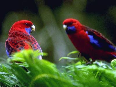 http://4.bp.blogspot.com/_ssZJuhpDZnY/THPySv9MBAI/AAAAAAAACeM/U55b2kyopBQ/s400/burung121.jpg