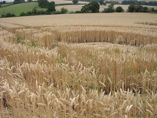 Crop Circle Garsington, OXON pics photos gallery