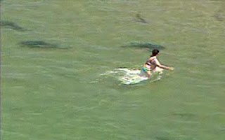 The Leopard sharks With Swimmer in California pictures pics gallery