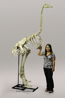 the Elephant Bird new fossil by sir David Attenborough in picture pic photo image gallery