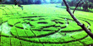 Amazing Phenomena Crop circle picture pic image photo gallery in Sleman, DI Jogjakarta, Indonesia January 23 2011